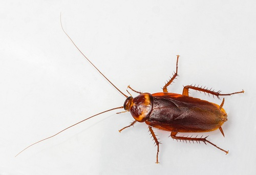 Pests for Every Season