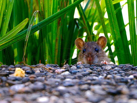Where to Check for Mice in Your Home.jpg5
