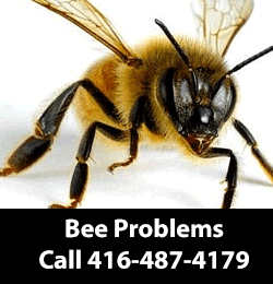 Bee Removal Service Serving North York