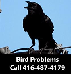 Bird Removing Serving Mississauga