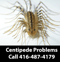 Centipede Removing Service