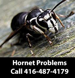 Hornet Removing