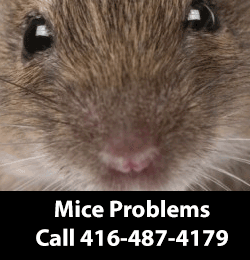 Mice Removing In North York