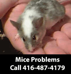 Mouse Removing Service Serving East York