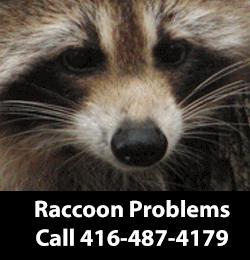 Raccoon Removers