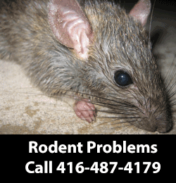 Rodent Removing Service