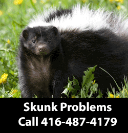 Skunk Removing Service