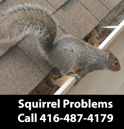 Squirrel Removal Service Serving East York